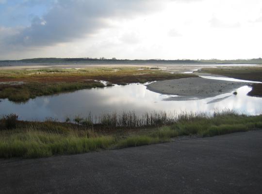 N-VA dwingt bescherming af van poldergraslanden
