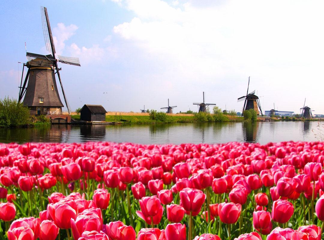 nederland-wil-geen-taalbeleid